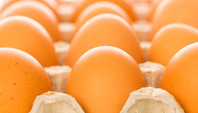 Many brown eggs Royalty Free Stock Photo