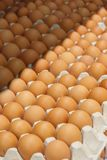 Many brown eggs in boxes. Many brown eggs in boxes in store Royalty Free Stock Photo