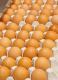 Many brown eggs in boxes in store close up.  Stock Image