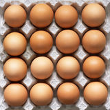 Many brown eggs in carton tray Stock Photography