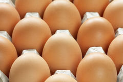 Many brown eggs in carton tray Royalty Free Stock Image