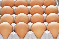 Many brown eggs in carton tray Stock Image