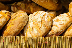 Many brown rustic fresh rye bread loaves Royalty Free Stock Images