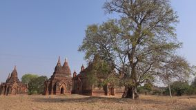 Many Buddhist temples in Bagan, Myanmar stock video footage
