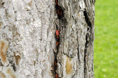 Many bugs on a tree. Royalty Free Stock Image