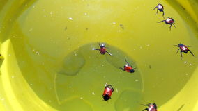 Many bugs in the water Stock Images