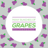 Many Bunches Of Grapes Background Royalty Free Stock Photography
