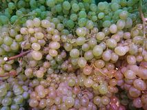 The grape is one of the foods that contains many properties and benefits for the health of the body. Many bunches with green and ripe grapes. The grape is one stock photos