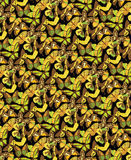 Many butterflies. Stock Photography