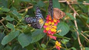 Many Butterflies on Flower