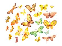 Many butterflies on white background. Watercolor illustration. Many butterflies isolated on white background. Watercolor illustration suitable for package decor Stock Image