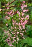 Many butterflies resting on pink flower in local ZOO. Live exhibition royalty free stock images