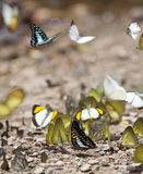 Many butterfly on the flow in the wild Stock Photos