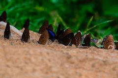 Butterfly diversity Many butterfly species Gathered. Stock Images