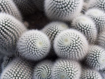 Many cactus Stock Photo