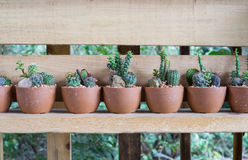 Many Cactus in pot Stock Photography