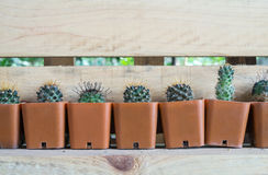 Many Cactus Stock Images
