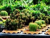 Many cactus pots on wood shelf in garden. Cactus pots on wood shelf in garden stock image