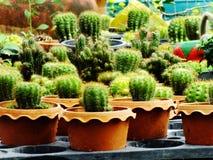 Many cactus pots on wood shelf in garden. Cactus pots on wood shelf in garden stock photo