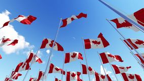 Many Canadian flags on flagpoles against blue sky. stock footage