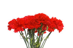 Many carnations isolated Royalty Free Stock Photos
