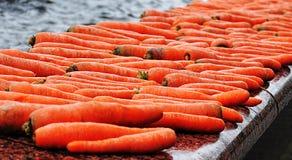 Many carrots Royalty Free Stock Image