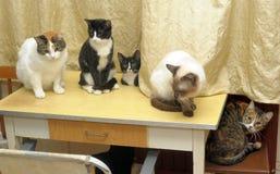 Many cats Royalty Free Stock Image
