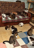 Many cats. In the apartment Royalty Free Stock Photos