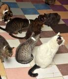 Many cats Stock Photos