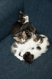 Many cats relaxing on sofa Stock Image