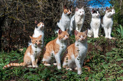 Many cats are sitting on the grass together. Royalty Free Stock Photos