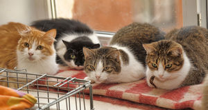 Many cats together Royalty Free Stock Photography