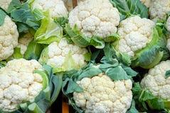 Many cauliflowers Stock Photo