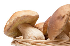 Many ceps in basket Royalty Free Stock Image