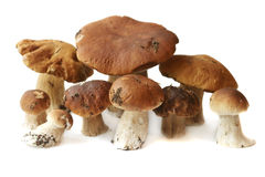 Many ceps are isolated Royalty Free Stock Photos