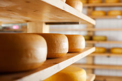 Many cheese-wheels maturing on shelves Stock Photo