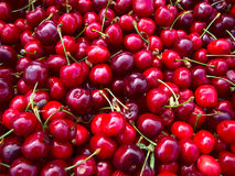 Many cherries. Lot of red and sweet cherries Royalty Free Stock Images