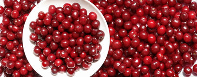 Many cherry berries on plate panorama Royalty Free Stock Photo