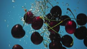 A fresh cherry are splashing into water on blue background. Many cherry are falling into water against blue background. A fresh cherry are splashing into water stock video footage