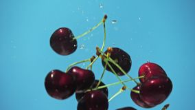 Many cherry are falling into water against blue background. A fresh cherry are splashing into water against blue background stock video