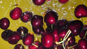 Many cherry are falling into water against yellow background. A fresh cherry are splashing into water against yellow background stock video footage