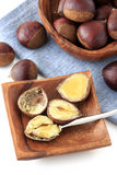 Many chestnut stock image