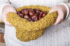 Many chestnuts in human hands.  royalty free stock images