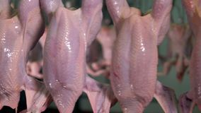 A close view on bare chicken carcasses in detail.