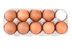 Chicken brown eggs in the egg tray. Isolated stock photography