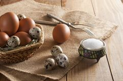 Many chicken and quail eggs, salt in saltshaker and two fork. Large brown chicken eggs and small motley quail eggs on straw in wicker basket. Near three quail stock photo