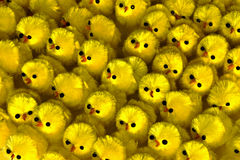 Lots of easter chicks. A closeup lots of little yellow easter chicks Stock Photography
