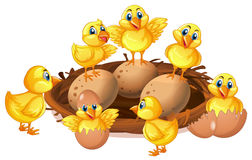 Many chicks and eggs in nest. Illustration vector illustration