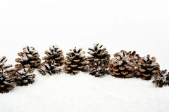 Many christmas pine cones on snow in line Stock Images