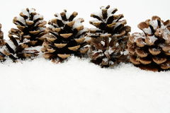 Many christmas pine cones on snow in line Stock Photography